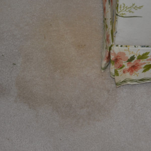 Amarillo dry carpet cleaning - pet stain before